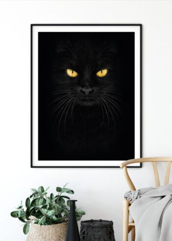 Plakat do salonu - Czarny Kot