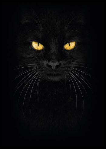 Plakat do sypialni: Czarny Kot
