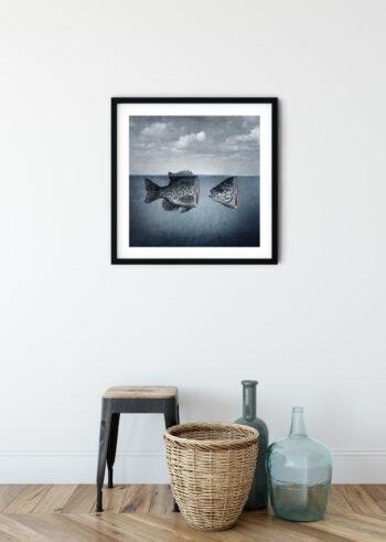 Ryba - plakaty do salonu