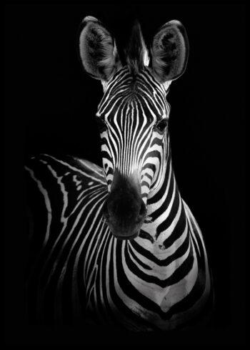 Plakat do sypialni - zebra